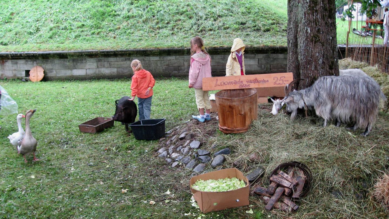 Children looking at animals at Hansa festival in Pärnu