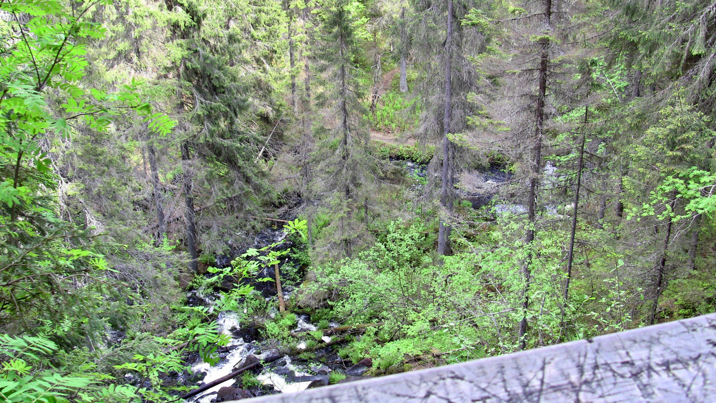 Korkeakoski is the highest white water in Finland