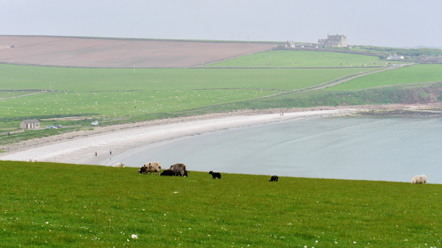 Farming in South Ronaldsay island of Orkney