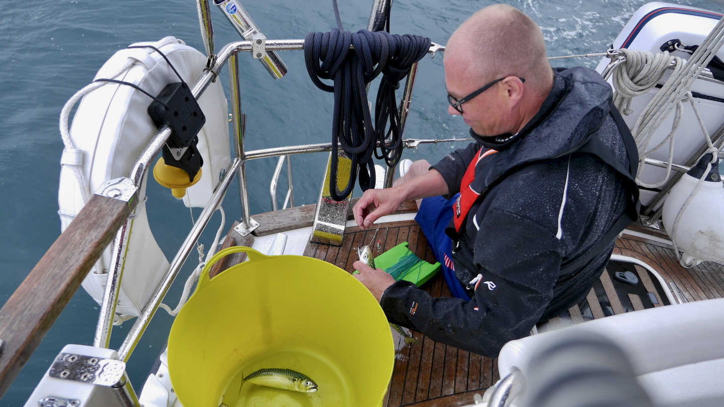 Esa and mackerel catch on the coast of Brittany