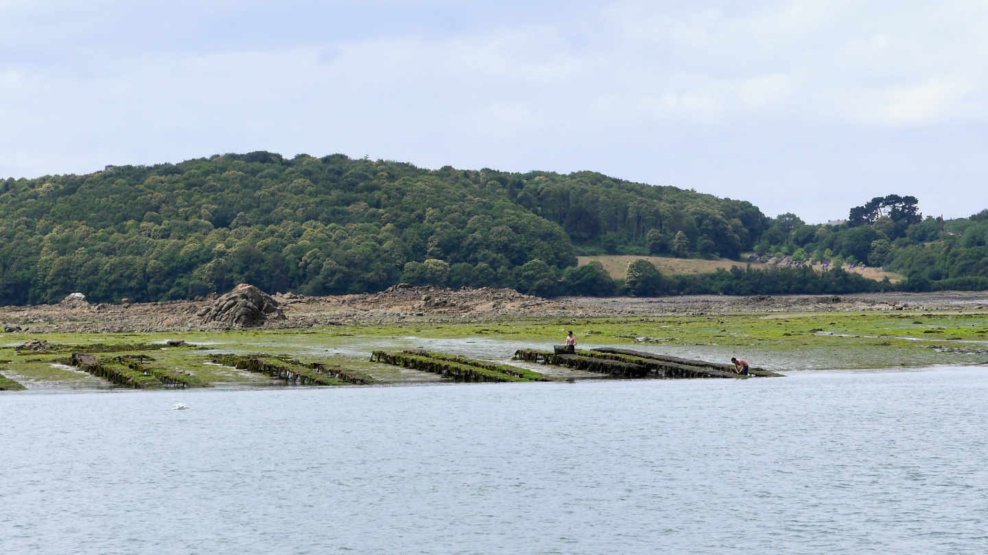 Oyster beds on the river Jaudy in Brittany