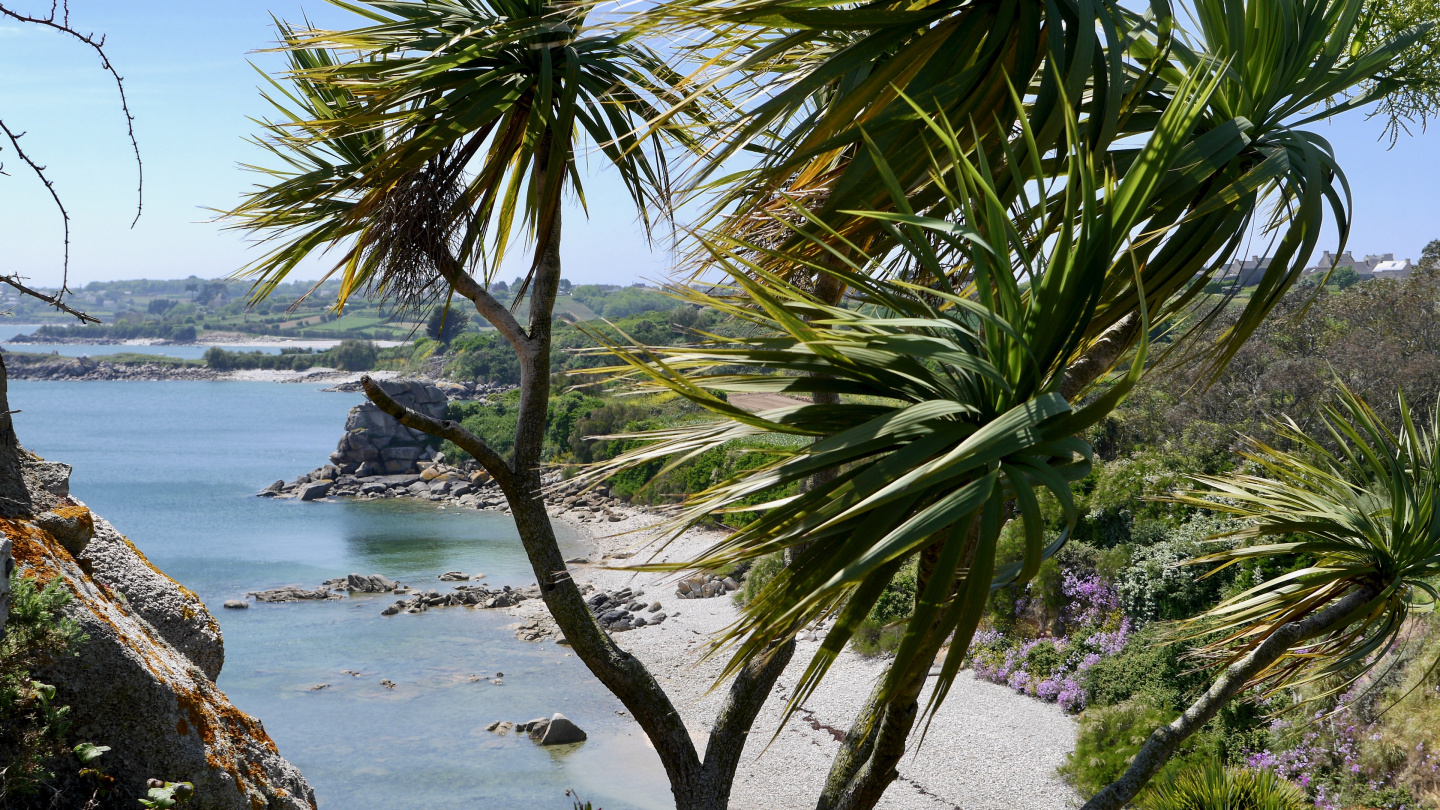 Tropical garden in Roscoff
