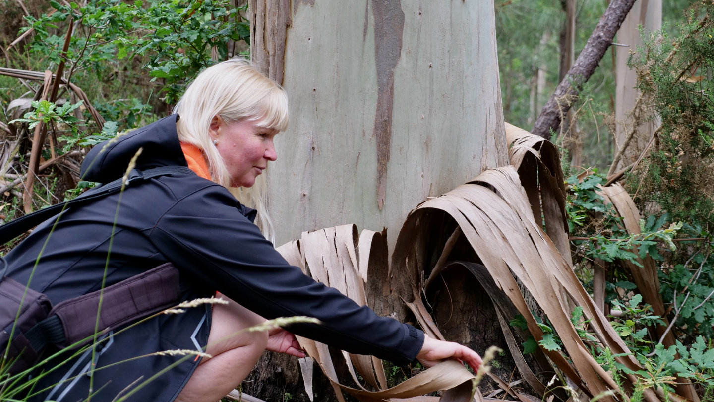 Eve looking at eucalyptus tree in Galicia