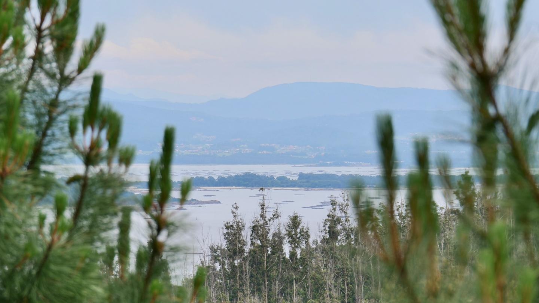 Ría de Arousa, Galicia
