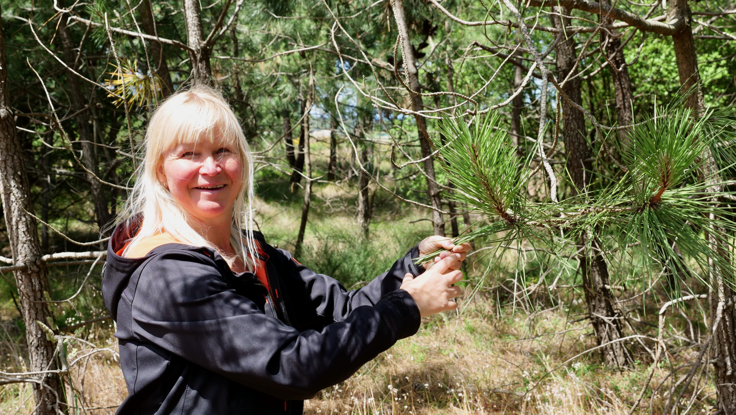 Eve looking at pine trees on the island of Arousa, Galicia